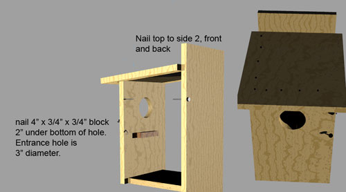 bird-box-top-and-inside